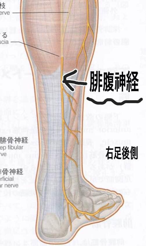 ふくらはぎの外側から足の小指が痺れる原因は?「腓腹神経麻痺」